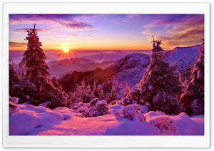Spruces On Mountain Sunset HD Wide Wallpaper for Widescreen