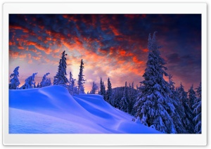 Spruces With Snow Sunset HD Wide Wallpaper for 4K UHD Widescreen desktop & smartphone