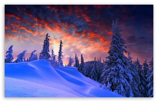 Ultra Hd Christmas Wallpapers: Spruces With Snow Sunset 4K HD Desktop Wallpaper For 4K