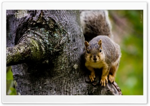 Squirrel HD Wide Wallpaper for 4K UHD Widescreen desktop & smartphone