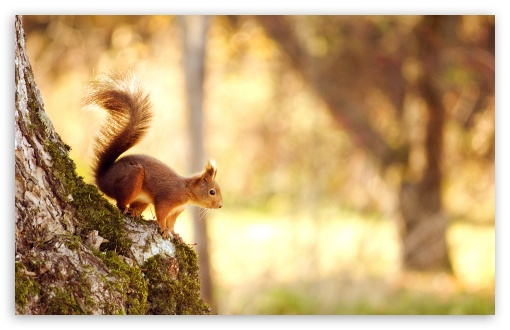 75 Hd Animals Ipad Backgrounds: Squirrel 4K HD Desktop Wallpaper For 4K Ultra HD TV