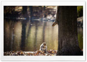 Squirrel Ultra HD Wallpaper for 4K UHD Widescreen desktop, tablet & smartphone