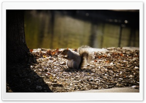 Squirrel HD Wide Wallpaper for Widescreen