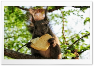 Squirrel Eating A Cookie HD Wide Wallpaper for Widescreen