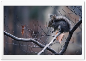 Squirrel In Tree HD Wide Wallpaper for Widescreen