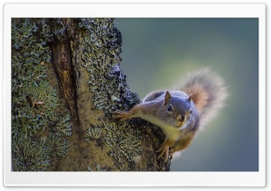 Squirrel On The Tree HD Wide Wallpaper for 4K UHD Widescreen desktop & smartphone
