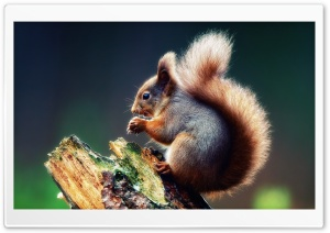 Squirrel Praying HD Wide Wallpaper for Widescreen