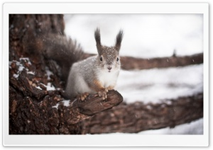 Squirrel Winter HD Wide Wallpaper for Widescreen