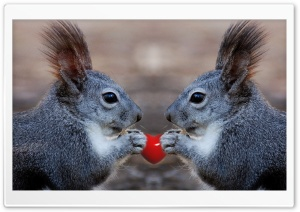 Squirrels Love HD Wide Wallpaper for Widescreen