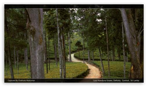 Sri Lanka Tea Estate ❤ 4K UHD Wallpaper for 4K UHD 16:9 Ultra High Definition 2160p 1440p 1080p 900p 720p ; UHD 16:9 2160p 1440p 1080p 900p 720p ; Mobile 16:9 - 2160p 1440p 1080p 900p 720p ;