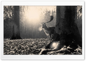 Stag Winter HD Wide Wallpaper for Widescreen