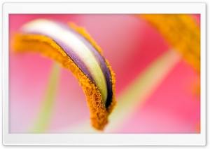 Stamen Macro HD Wide Wallpaper for Widescreen