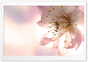Stamens HD Wide Wallpaper for Widescreen