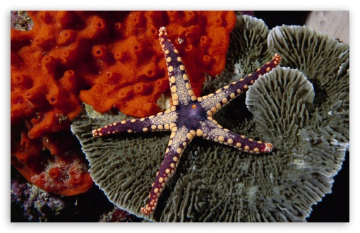 Starfish ❤ 4K UHD Wallpaper for Wide 16:10 5:3 Widescreen WHXGA WQXGA WUXGA WXGA WGA ; 4K UHD 16:9 Ultra High Definition 2160p 1440p 1080p 900p 720p ; Standard 4:3 5:4 3:2 Fullscreen UXGA XGA SVGA QSXGA SXGA DVGA HVGA HQVGA ( Apple PowerBook G4 iPhone 4 3G 3GS iPod Touch ) ; Tablet 1:1 ; iPad 1/2/Mini ; Mobile 4:3 5:3 3:2 16:9 5:4 - UXGA XGA SVGA WGA DVGA HVGA HQVGA ( Apple PowerBook G4 iPhone 4 3G 3GS iPod Touch ) 2160p 1440p 1080p 900p 720p QSXGA SXGA ;