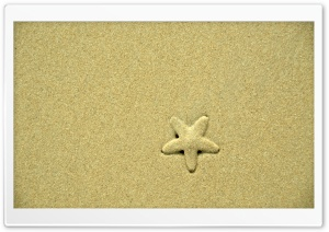 Starfish HD Wide Wallpaper for Widescreen