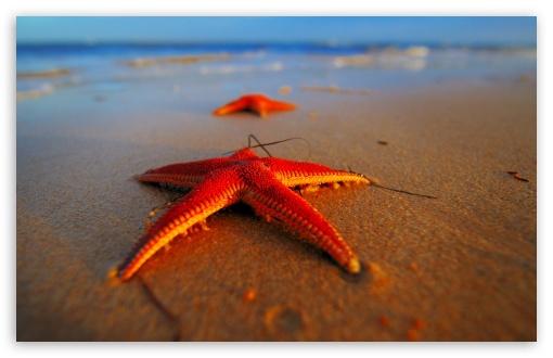 Starfish UltraHD Wallpaper for Wide 16:10 Widescreen WHXGA WQXGA WUXGA WXGA ;