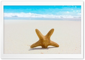 Starfish And Sand HD Wide Wallpaper for Widescreen