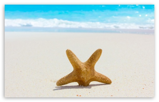 Starfish And Sand HD wallpaper for Wide 16:10 5:3 Widescreen WHXGA WQXGA WUXGA WXGA WGA ; HD 16:9 High Definition WQHD QWXGA 1080p 900p 720p QHD nHD ; Standard 4:3 5:4 3:2 Fullscreen UXGA XGA SVGA QSXGA SXGA DVGA HVGA HQVGA devices ( Apple PowerBook G4 iPhone 4 3G 3GS iPod Touch ) ; Tablet 1:1 ; iPad 1/2/Mini ; Mobile 4:3 5:3 3:2 16:9 5:4 - UXGA XGA SVGA WGA DVGA HVGA HQVGA devices ( Apple PowerBook G4 iPhone 4 3G 3GS iPod Touch ) WQHD QWXGA 1080p 900p 720p QHD nHD QSXGA SXGA ; Dual 16:10 5:3 16:9 4:3 5:4 WHXGA WQXGA WUXGA WXGA WGA WQHD QWXGA 1080p 900p 720p QHD nHD UXGA XGA SVGA QSXGA SXGA ;