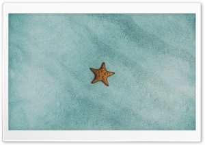 Starfish Ocean  Underwater Ultra HD Wallpaper for 4K UHD Widescreen desktop, tablet & smartphone