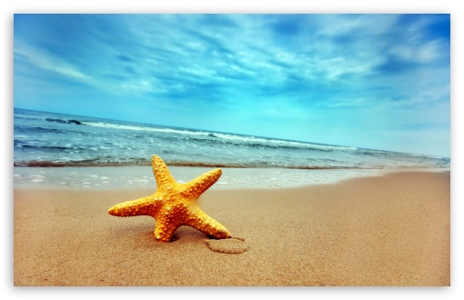Download Starfish On The Beach HD Wallpaper