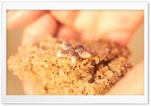 Starfish On The Beach HD Wide Wallpaper for Widescreen