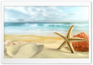 Starfish On The Beach HD Wide Wallpaper for 4K UHD Widescreen desktop & smartphone