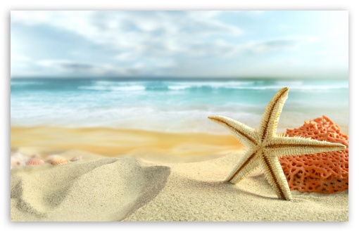 Starfish On The Beach HD wallpaper for Wide 16:10 5:3 Widescreen WHXGA WQXGA WUXGA WXGA WGA ; HD 16:9 High Definition WQHD QWXGA 1080p 900p 720p QHD nHD ; Standard 4:3 5:4 3:2 Fullscreen UXGA XGA SVGA QSXGA SXGA DVGA HVGA HQVGA devices ( Apple PowerBook G4 iPhone 4 3G 3GS iPod Touch ) ; Tablet 1:1 ; iPad 1/2/Mini ; Mobile 4:3 5:3 3:2 16:9 5:4 - UXGA XGA SVGA WGA DVGA HVGA HQVGA devices ( Apple PowerBook G4 iPhone 4 3G 3GS iPod Touch ) WQHD QWXGA 1080p 900p 720p QHD nHD QSXGA SXGA ; Dual 4:3 5:4 UXGA XGA SVGA QSXGA SXGA ;