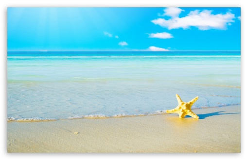 Starfish On The Beach ❤ 4K UHD Wallpaper for Wide 16:10 5:3 Widescreen WHXGA WQXGA WUXGA WXGA WGA ; 4K UHD 16:9 Ultra High Definition 2160p 1440p 1080p 900p 720p ; Standard 4:3 5:4 3:2 Fullscreen UXGA XGA SVGA QSXGA SXGA DVGA HVGA HQVGA ( Apple PowerBook G4 iPhone 4 3G 3GS iPod Touch ) ; Tablet 1:1 ; iPad 1/2/Mini ; Mobile 4:3 5:3 3:2 16:9 5:4 - UXGA XGA SVGA WGA DVGA HVGA HQVGA ( Apple PowerBook G4 iPhone 4 3G 3GS iPod Touch ) 2160p 1440p 1080p 900p 720p QSXGA SXGA ; Dual 16:10 5:3 16:9 4:3 5:4 WHXGA WQXGA WUXGA WXGA WGA 2160p 1440p 1080p 900p 720p UXGA XGA SVGA QSXGA SXGA ;