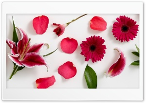 Stargazer lily, Peruvian lily, Rose Petals and Gerbera Daisy HD Wide Wallpaper for Widescreen