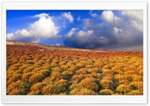 Steppe Vegetation HD Wide Wallpaper for Widescreen