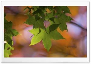 Still Green Ultra HD Wallpaper for 4K UHD Widescreen desktop, tablet & smartphone