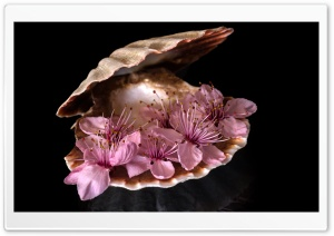 Still Life Photography Blossom Flowers HD Wide Wallpaper for Widescreen