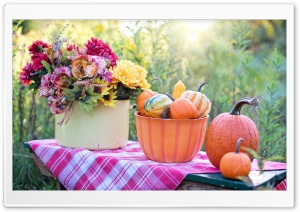 Still Life Pumpkins Bowl, Flowers, Early Autumn HD Wide Wallpaper for 4K UHD Widescreen desktop & smartphone