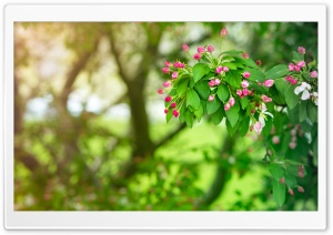 Still Spring HD Wide Wallpaper for Widescreen