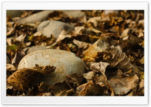 Stony Leaf HD Wide Wallpaper for Widescreen