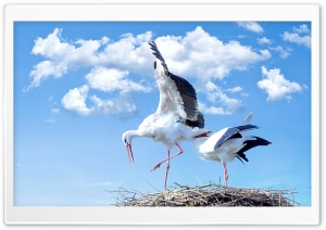 Storks Nest HD Wide Wallpaper for Widescreen