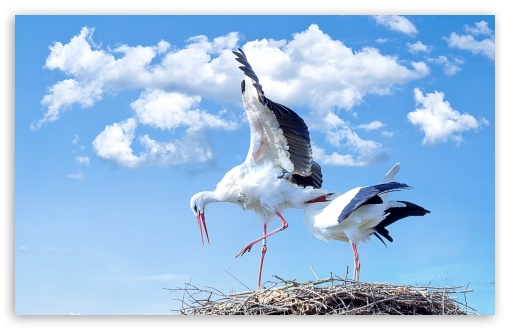 Storks Nest ❤ 4K UHD Wallpaper for Wide 16:10 5:3 Widescreen WHXGA WQXGA WUXGA WXGA WGA ; 4K UHD 16:9 Ultra High Definition 2160p 1440p 1080p 900p 720p ; Standard 4:3 5:4 3:2 Fullscreen UXGA XGA SVGA QSXGA SXGA DVGA HVGA HQVGA ( Apple PowerBook G4 iPhone 4 3G 3GS iPod Touch ) ; Smartphone 5:3 WGA ; Tablet 1:1 ; iPad 1/2/Mini ; Mobile 4:3 5:3 3:2 16:9 5:4 - UXGA XGA SVGA WGA DVGA HVGA HQVGA ( Apple PowerBook G4 iPhone 4 3G 3GS iPod Touch ) 2160p 1440p 1080p 900p 720p QSXGA SXGA ;