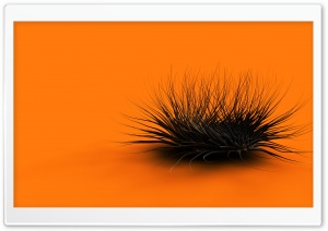 Strange Creature Orange HD Wide Wallpaper for Widescreen
