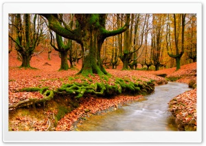 Strange Forest Autumn HD Wide Wallpaper for Widescreen