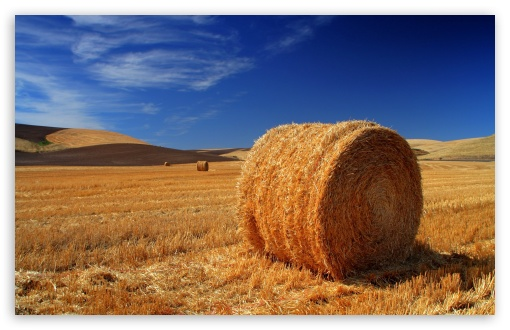 Straw Bale Autumn ❤ 4K UHD Wallpaper for Wide 16:10 5:3 Widescreen WHXGA WQXGA WUXGA WXGA WGA ; 4K UHD 16:9 Ultra High Definition 2160p 1440p 1080p 900p 720p ; Standard 4:3 5:4 3:2 Fullscreen UXGA XGA SVGA QSXGA SXGA DVGA HVGA HQVGA ( Apple PowerBook G4 iPhone 4 3G 3GS iPod Touch ) ; Tablet 1:1 ; iPad 1/2/Mini ; Mobile 4:3 5:3 3:2 16:9 5:4 - UXGA XGA SVGA WGA DVGA HVGA HQVGA ( Apple PowerBook G4 iPhone 4 3G 3GS iPod Touch ) 2160p 1440p 1080p 900p 720p QSXGA SXGA ;