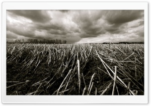 Straw Field HD Wide Wallpaper for Widescreen