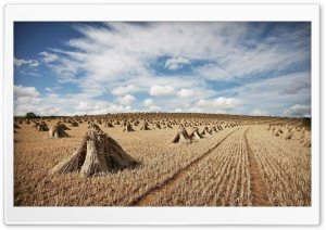 Straw Field Ultra HD Wallpaper for 4K UHD Widescreen desktop, tablet & smartphone