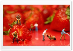 Strawberries HD Wide Wallpaper for Widescreen