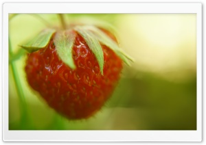 Strawberry HD Wide Wallpaper for Widescreen