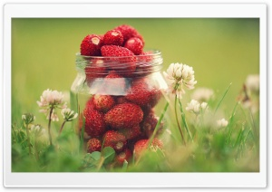 Strawberry Jar HD Wide Wallpaper for Widescreen