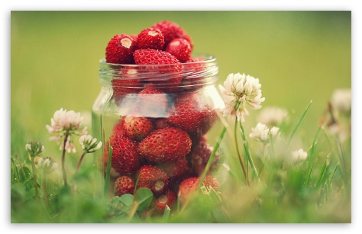 Strawberry Jar ❤ 4K UHD Wallpaper for Wide 16:10 5:3 Widescreen WHXGA WQXGA WUXGA WXGA WGA ; 4K UHD 16:9 Ultra High Definition 2160p 1440p 1080p 900p 720p ; UHD 16:9 2160p 1440p 1080p 900p 720p ; Standard 4:3 5:4 3:2 Fullscreen UXGA XGA SVGA QSXGA SXGA DVGA HVGA HQVGA ( Apple PowerBook G4 iPhone 4 3G 3GS iPod Touch ) ; Tablet 1:1 ; iPad 1/2/Mini ; Mobile 4:3 5:3 3:2 16:9 5:4 - UXGA XGA SVGA WGA DVGA HVGA HQVGA ( Apple PowerBook G4 iPhone 4 3G 3GS iPod Touch ) 2160p 1440p 1080p 900p 720p QSXGA SXGA ; Dual 5:4 QSXGA SXGA ;