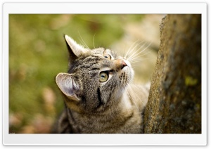 Stray Cat HD Wide Wallpaper for Widescreen