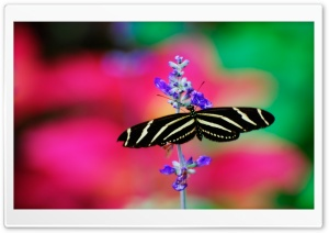 Striped Butterfly HD Wide Wallpaper for Widescreen