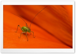 Striped Grasshopper Macro HD Wide Wallpaper for Widescreen