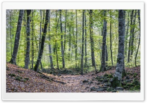 Strolling Around La Fageda den Jord Catalonia Ultra HD Wallpaper for 4K UHD Widescreen desktop, tablet & smartphone